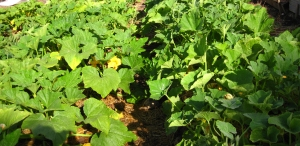 HappyDay CSA Newsletter - March 27th, 2013